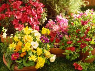 TS-86507236_container-flower-garden_s4x3.jpg.rend.hgtvcom.1280.960